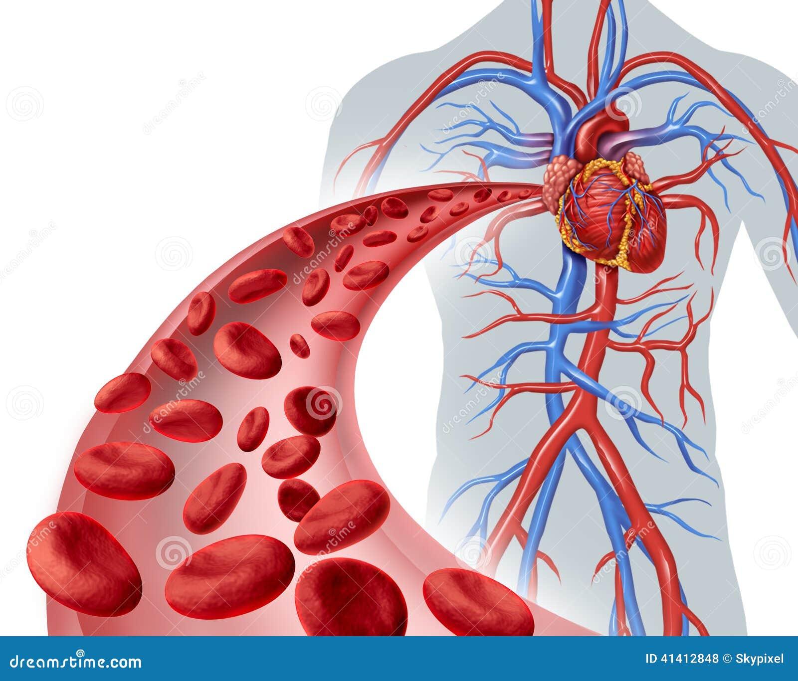 Circulação de coração do sangue