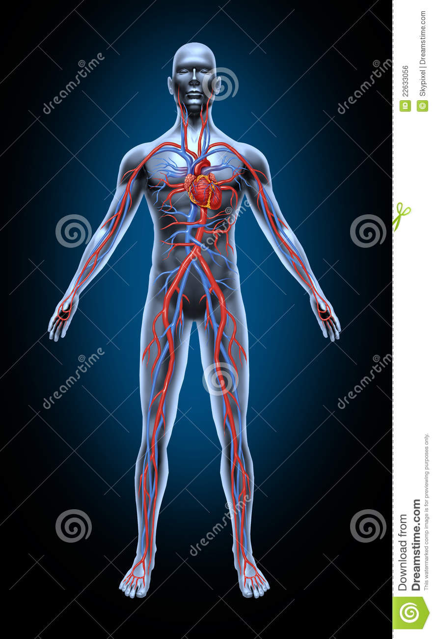 7636530 together with Watch also 3402540 in addition Microcirculation 62555783 moreover Royalty Free Stock Image Mural Thrombus Image27478246. on circulatory system blood flow