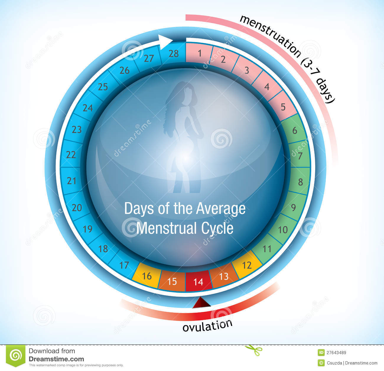 Circular flow chart showing days of menstruation