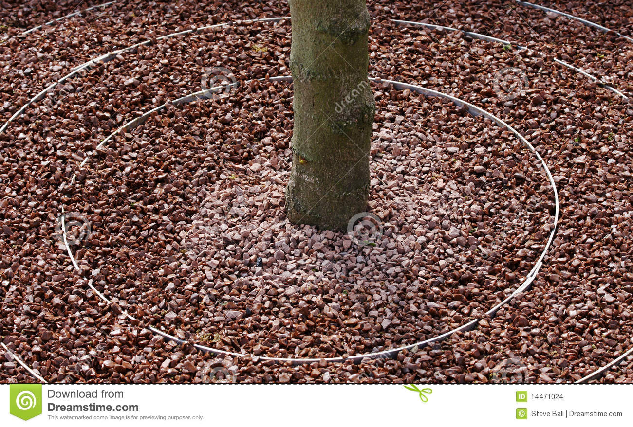 Circular tree surround stock images image 14471024 - Tell tree dying order save ...