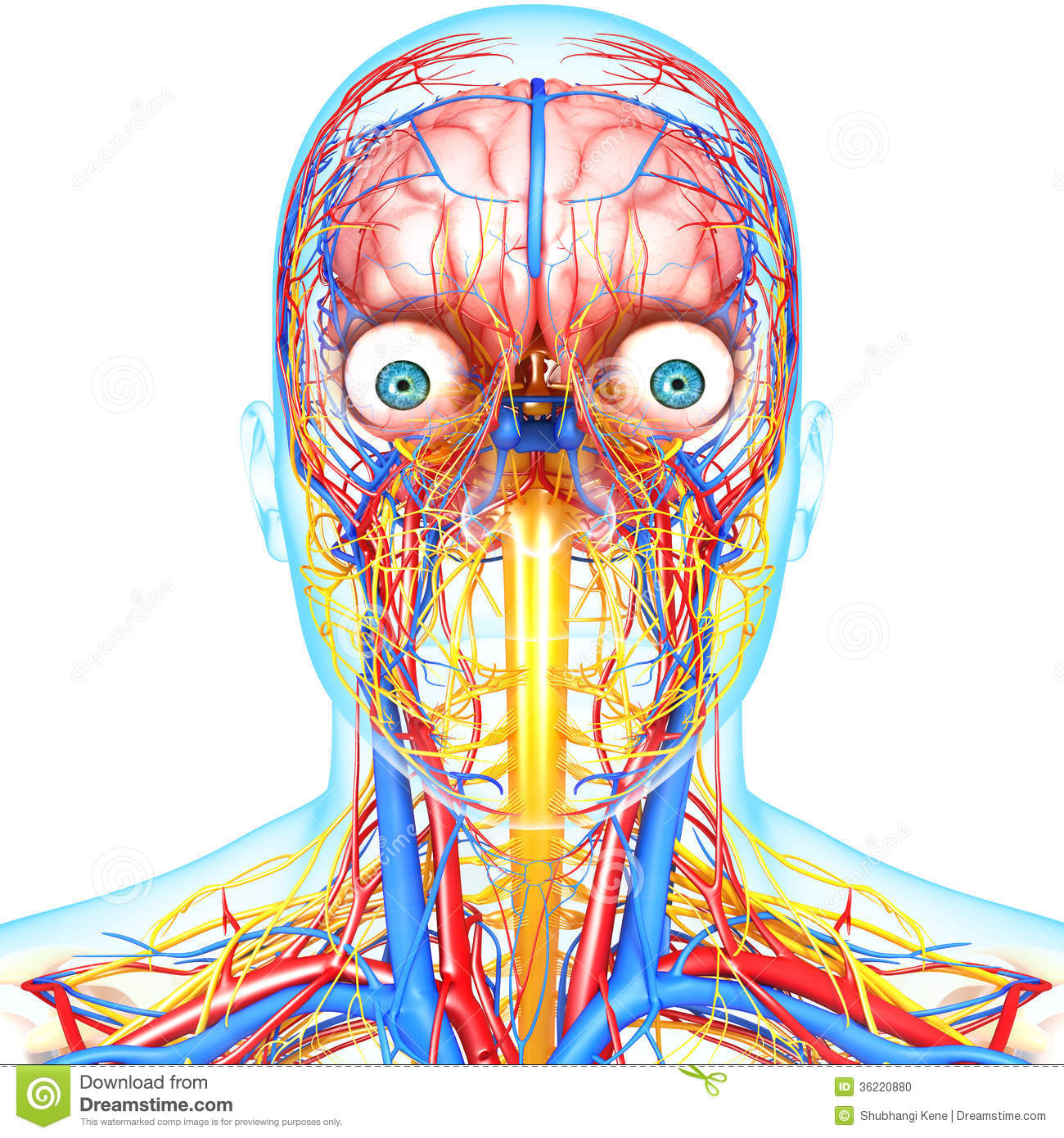 Nervous System Head Diagram Block And Schematic Diagrams