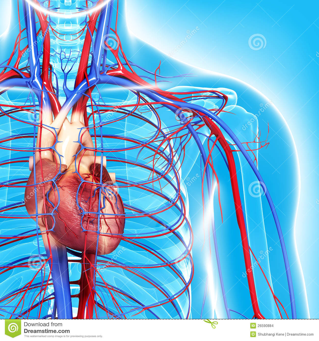 Content Section 1 also Stock Vector Illustration Of Stylized Organs Inside The Human Body For Medical Purposes in addition Open Circulatory System Diagram in addition Top 10 Simple Dietary Swaps Health as well Circulatory System Heart Clipart. on simple cardiovascular system