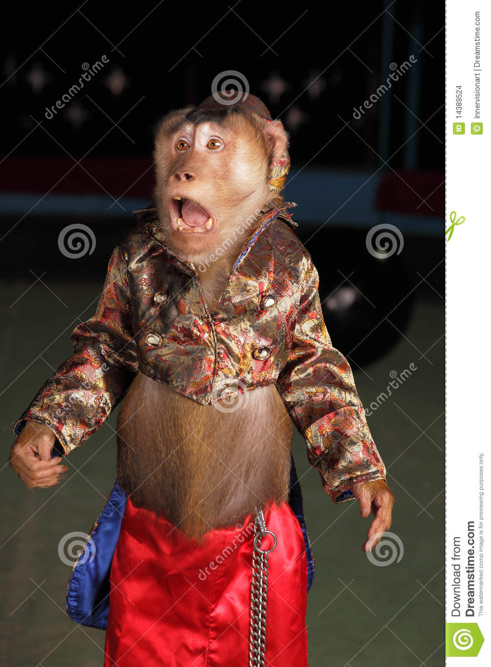 Circus Chimpanzee Monkey In A Suit And A Hat Stock Photo
