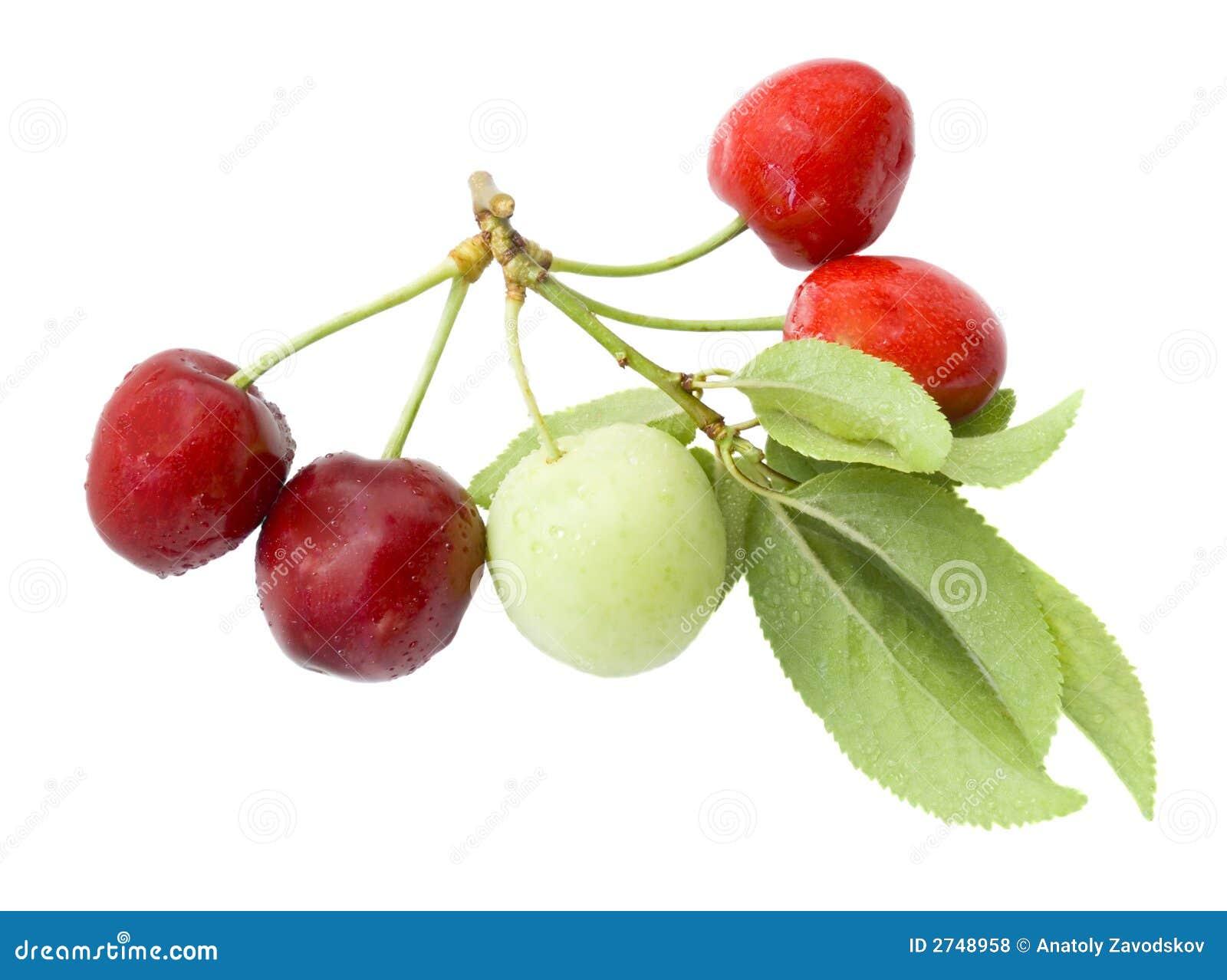 Ciruelo verde y cereza roja