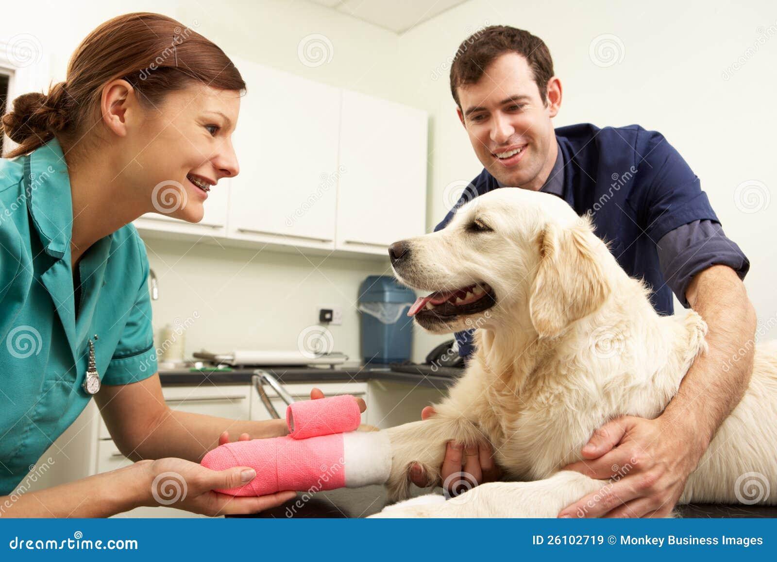Cirujano veterinario de sexo masculino que trata el perro en cirugía