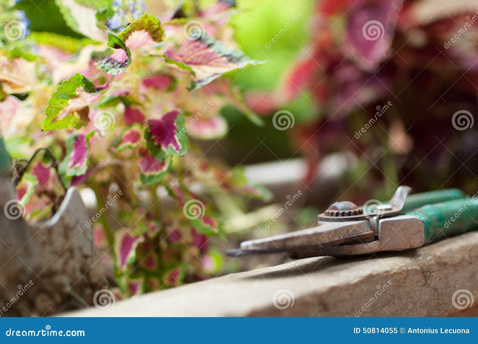 Ciseaux de jardin sur potplant