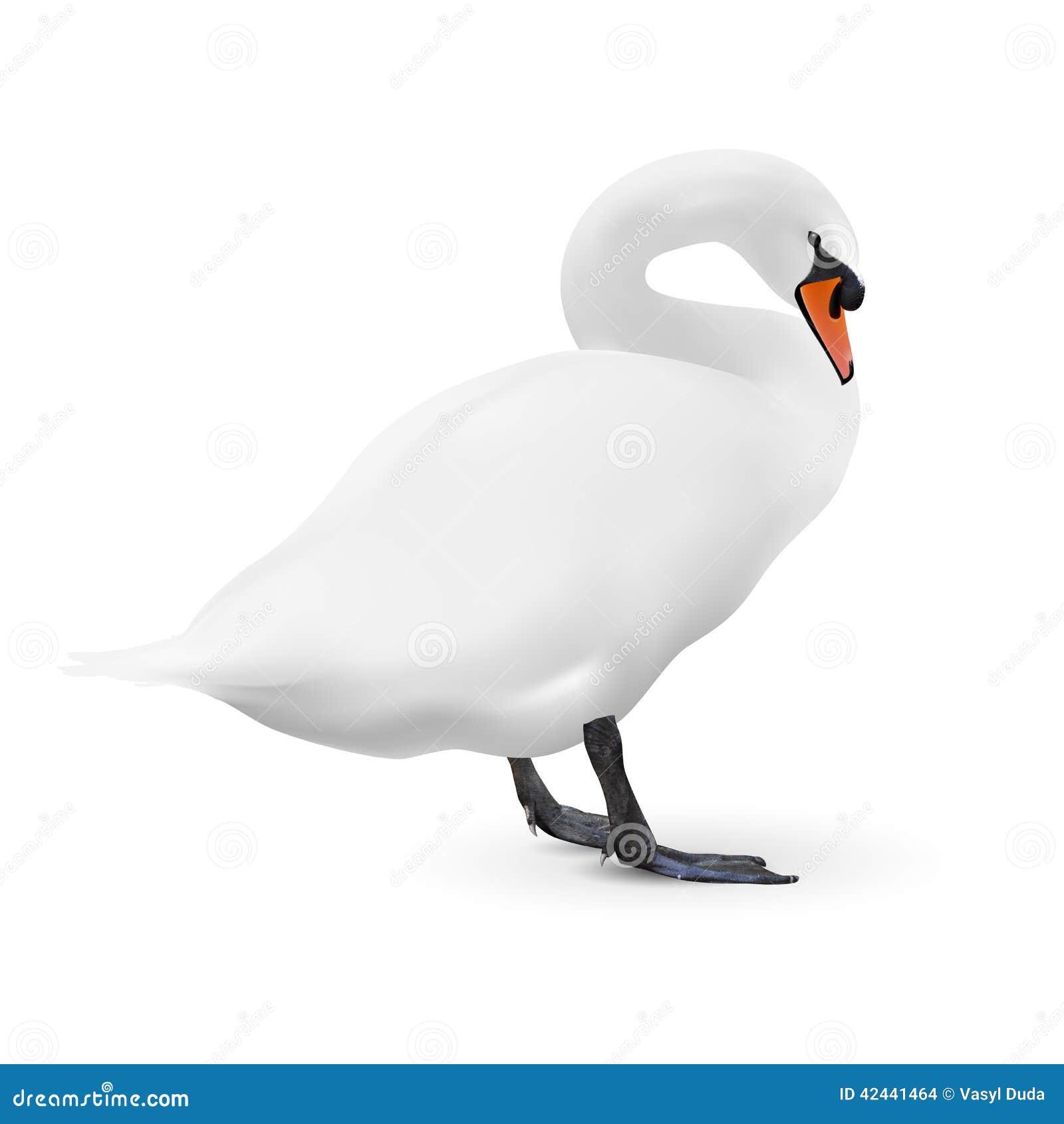 Cisne blanco en blanco