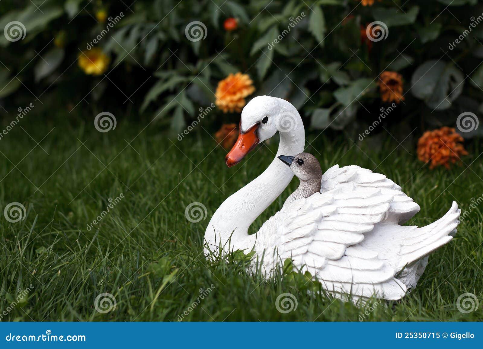 Cisne da matriz com cygnets