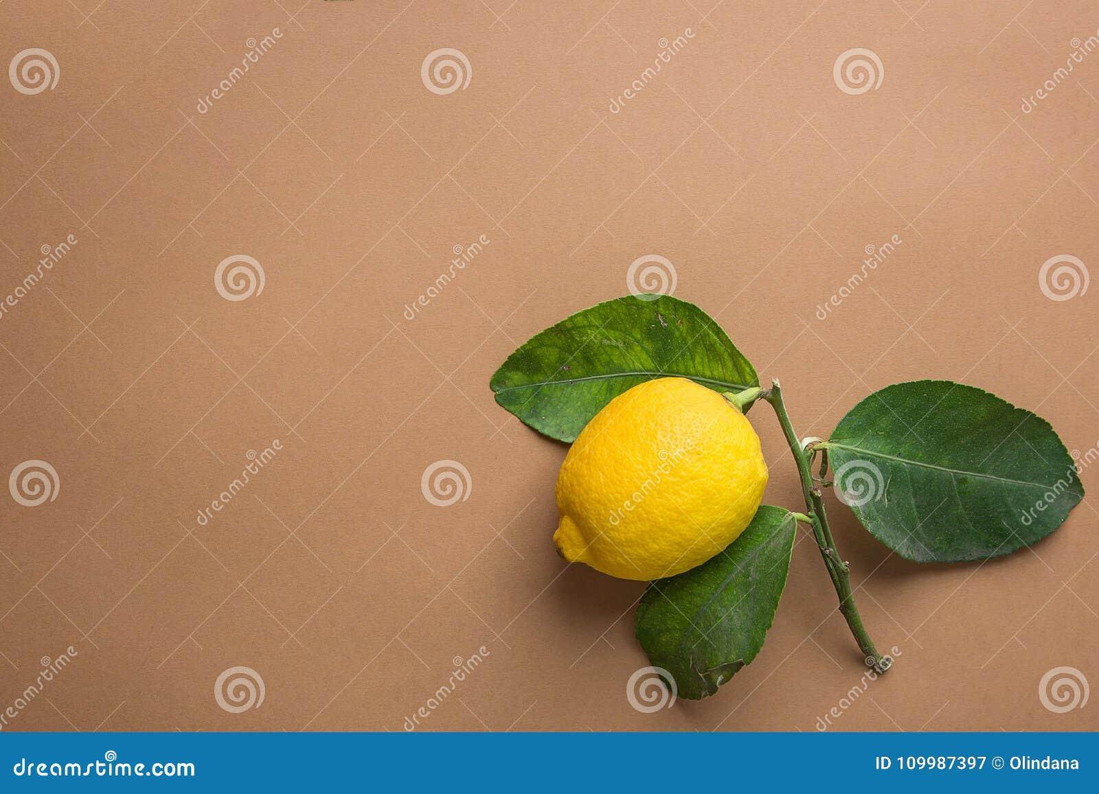 Citron organique mûr jaune lumineux sur la branche avec des feuilles de vert sur le fond beige de Brown Imperfections évidentes I