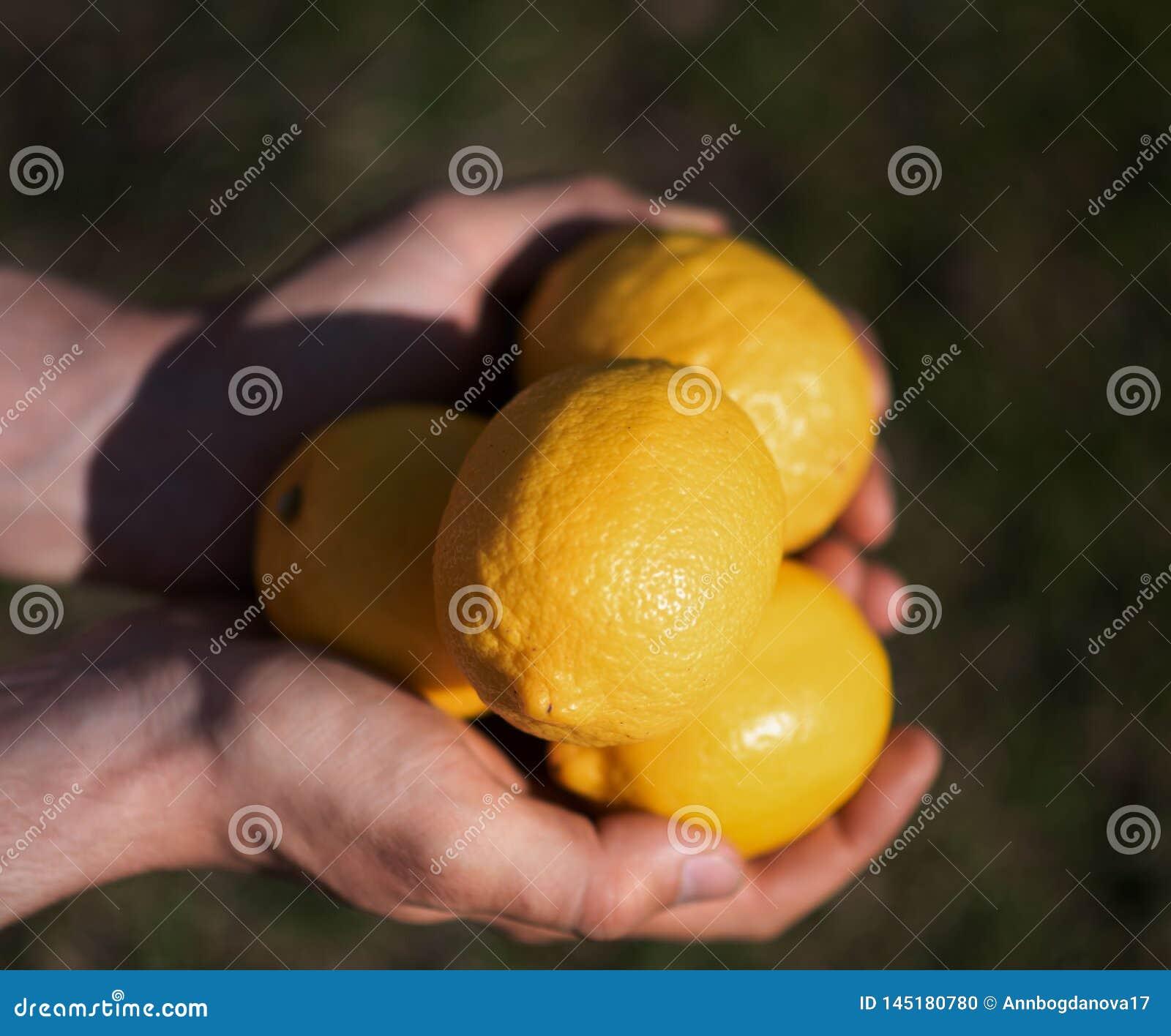 Citroner i händerna utomhus