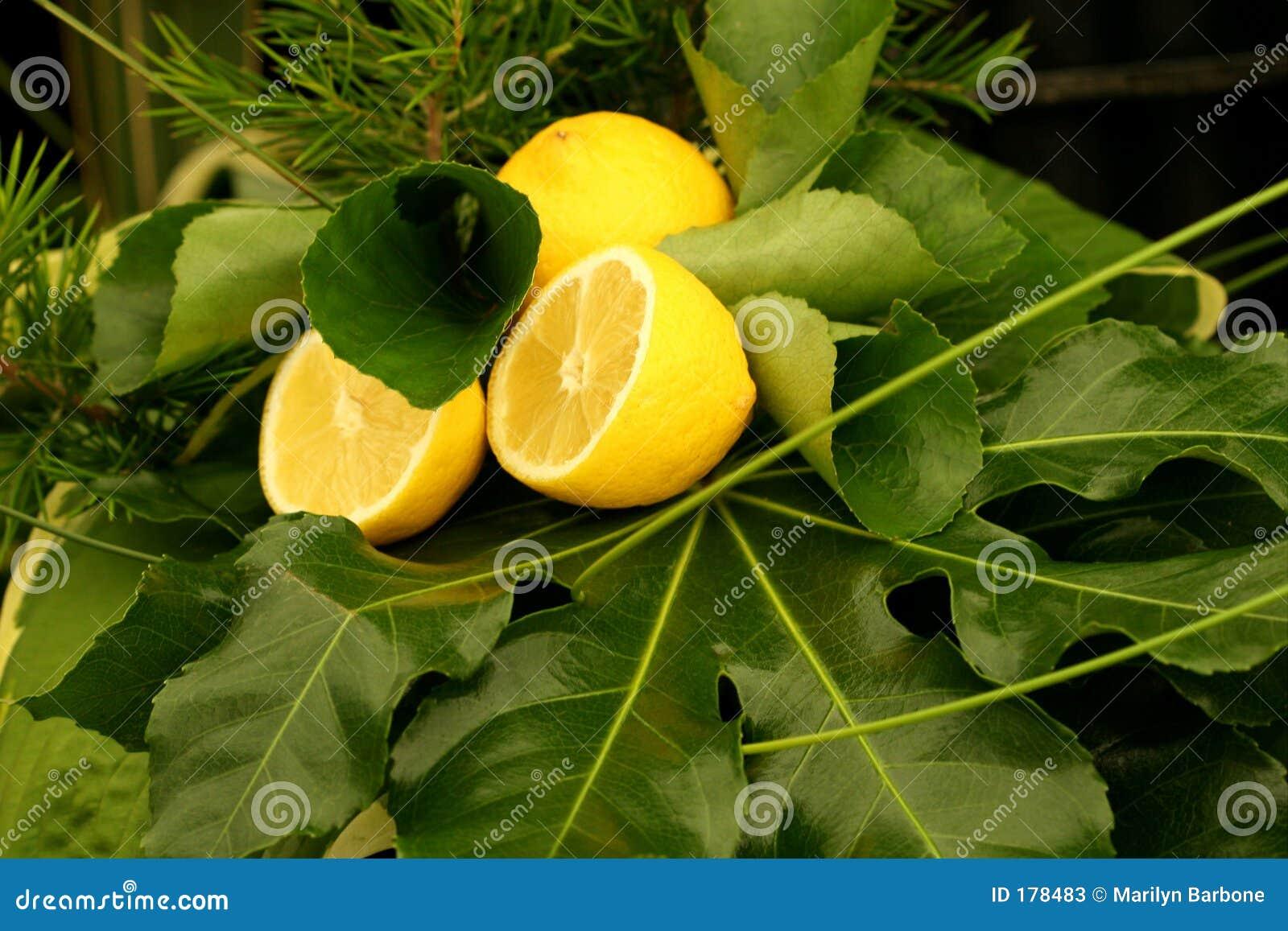 Citrons et verdure