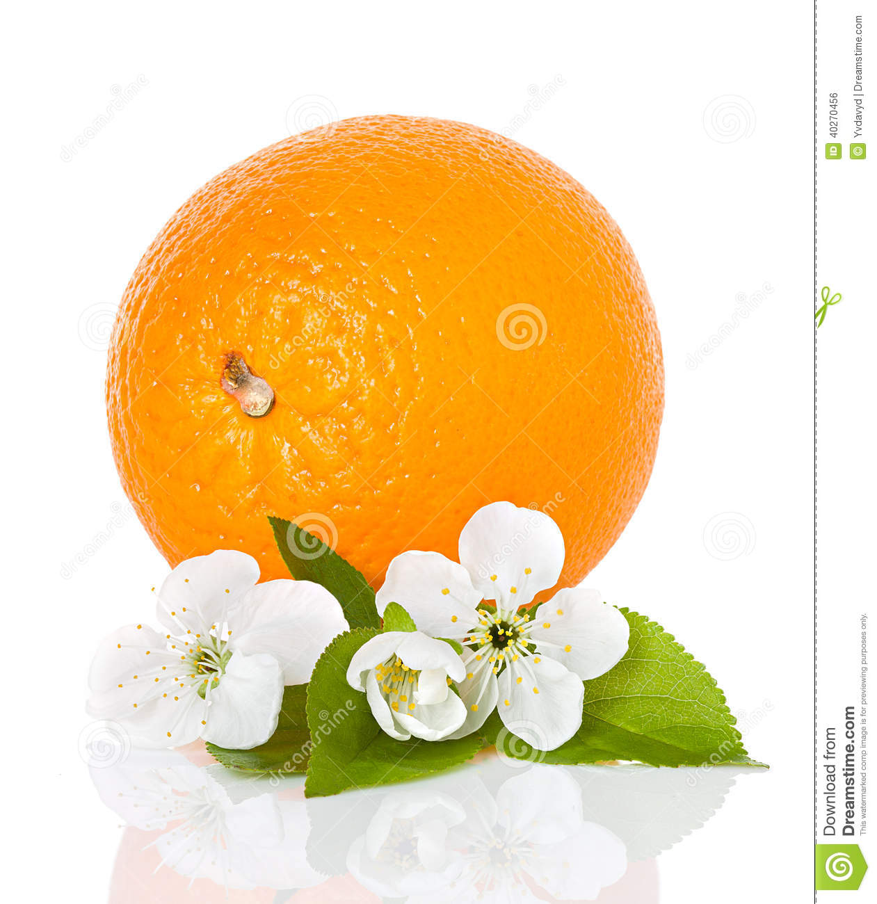 Citrus Fruit Orange With Flowers And Leaves Stock Photo - Image ...