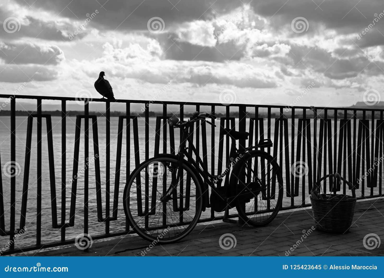 Città di Siracusa, dal mare un uccello e una bicicletta