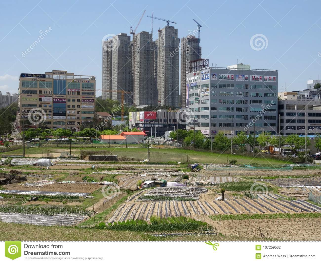 City growth: from small vegetable fields to modern skyscrapers