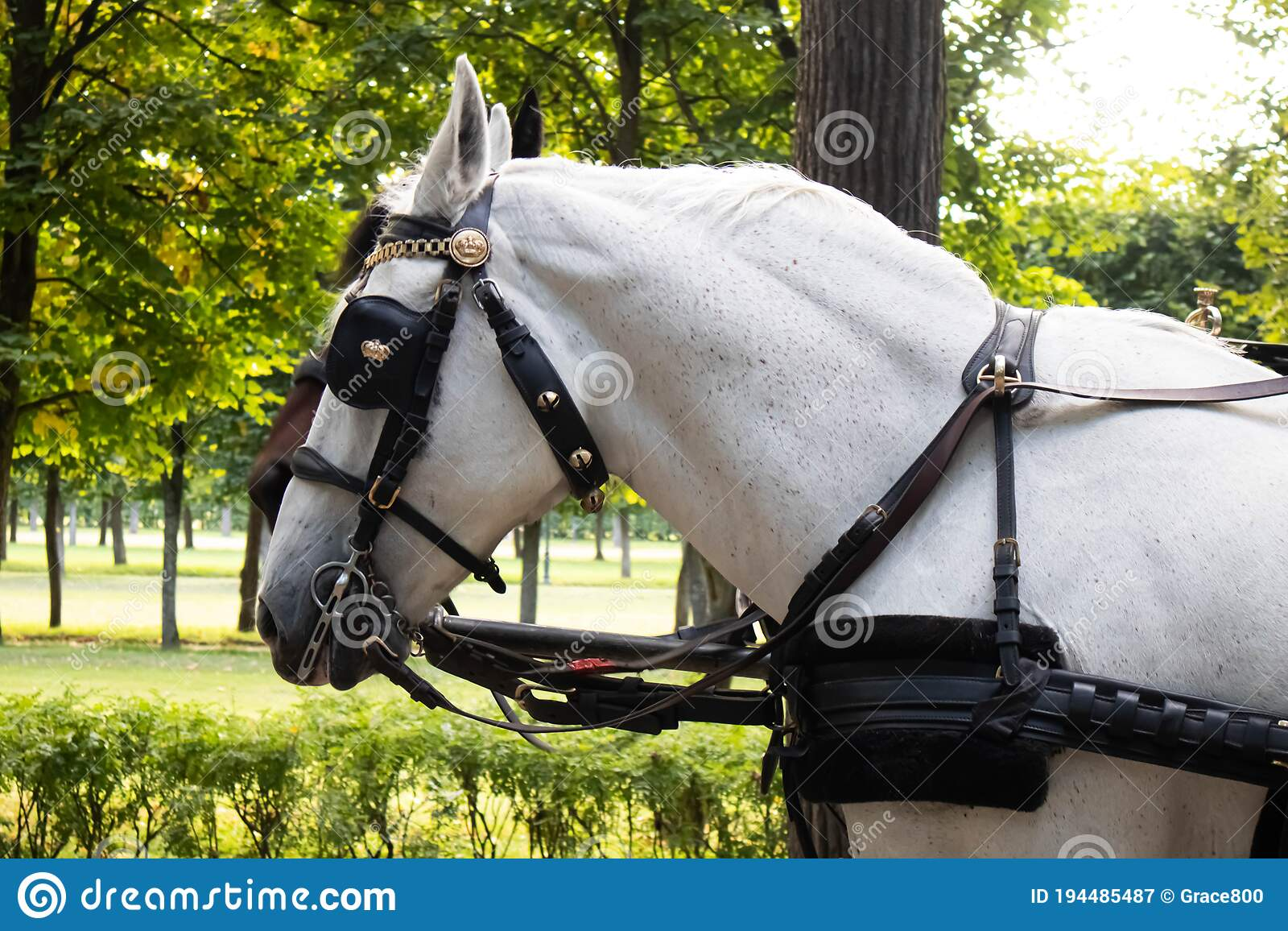2 786 Equine Holiday Photos Free Royalty Free Stock Photos From Dreamstime