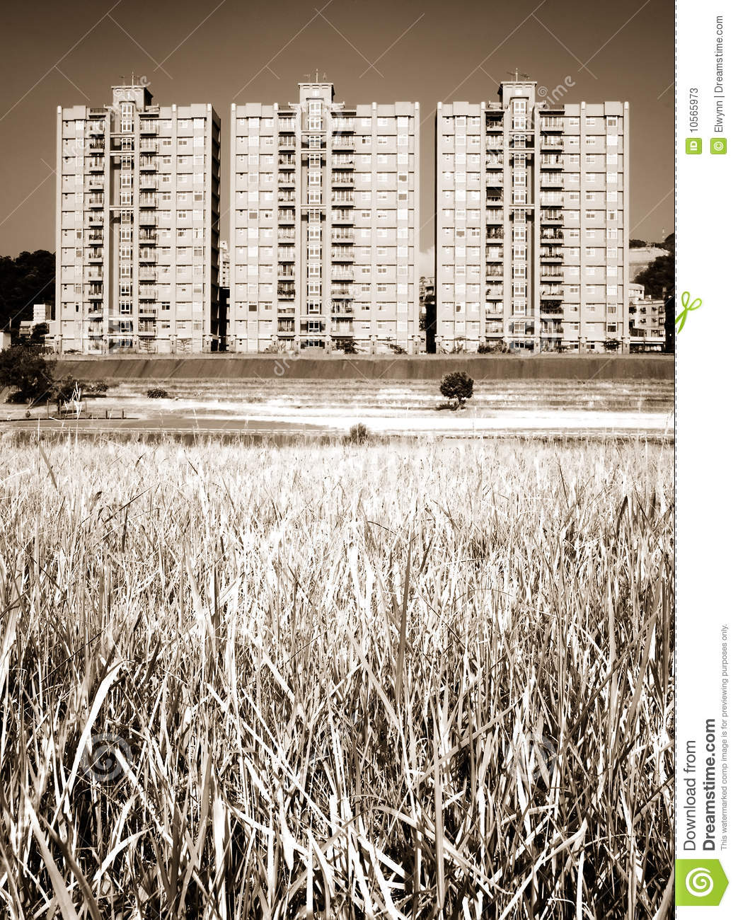 Cityscape Of Apartments With Grassland Stock Image