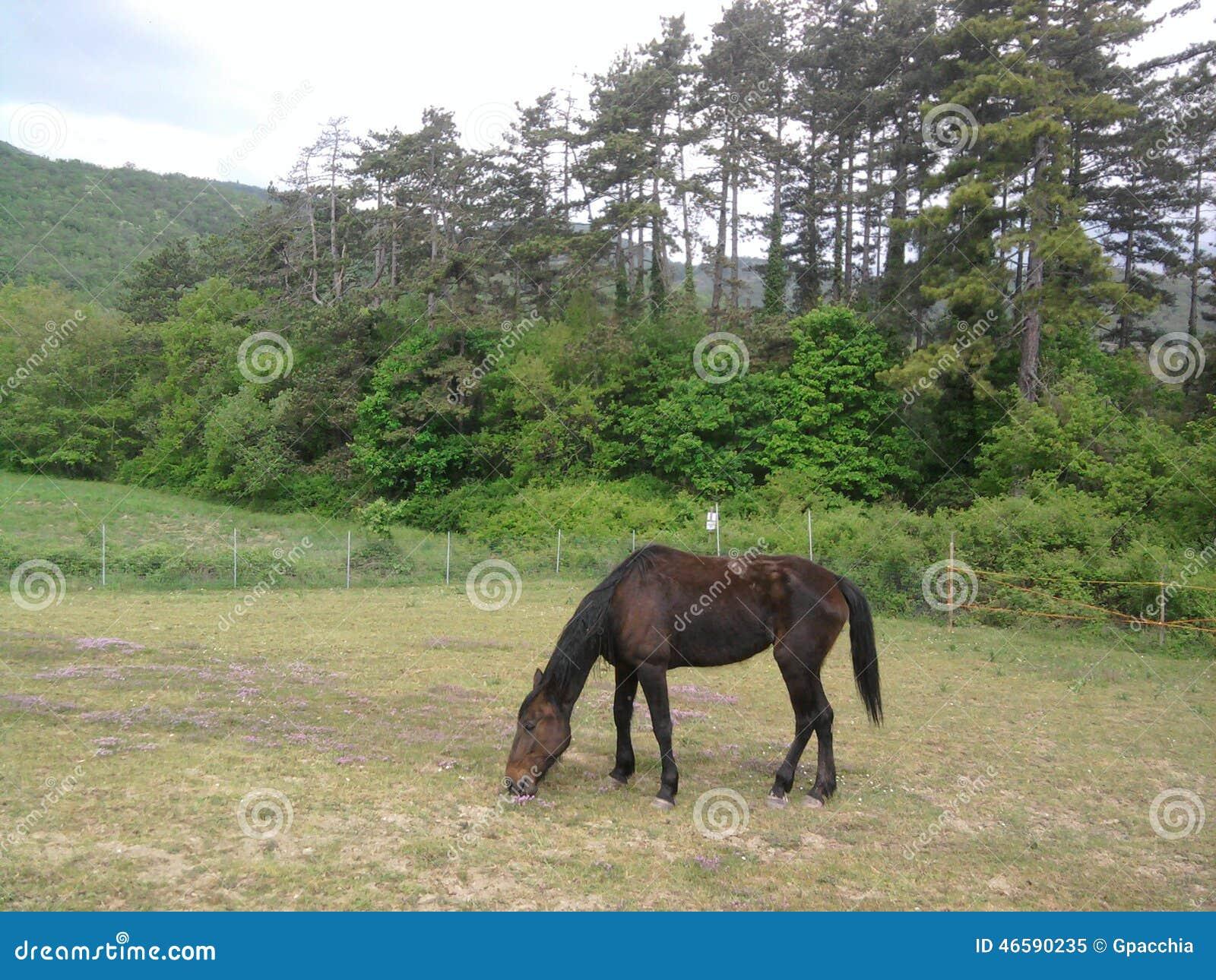 Clôturez le cheval vigoureux casei de De tandis que frôlez l herbe