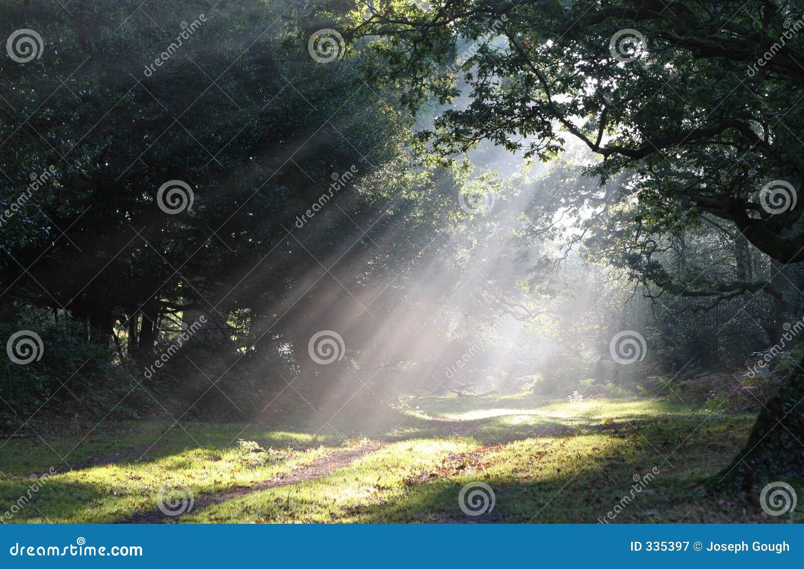 Clairi Re De For T De Brouillard De Lumi Re Du Soleil