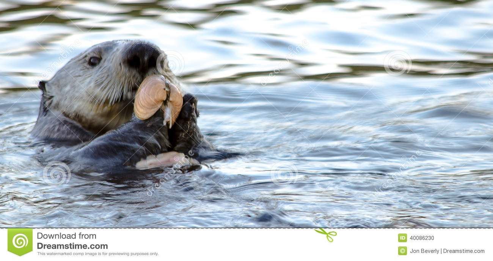 Bake Otter Style stock photo. Image of face, america ...