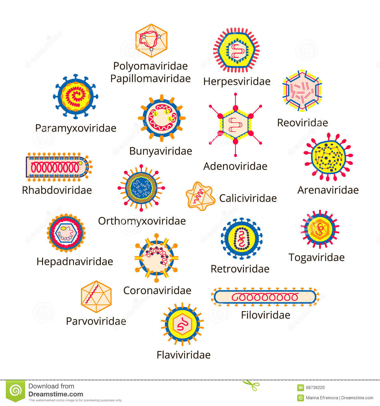 Classification of viruses.