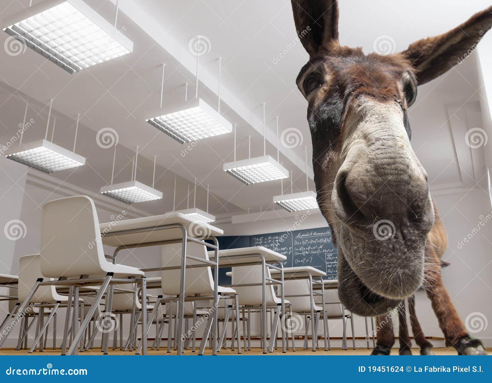 Classroom donkey