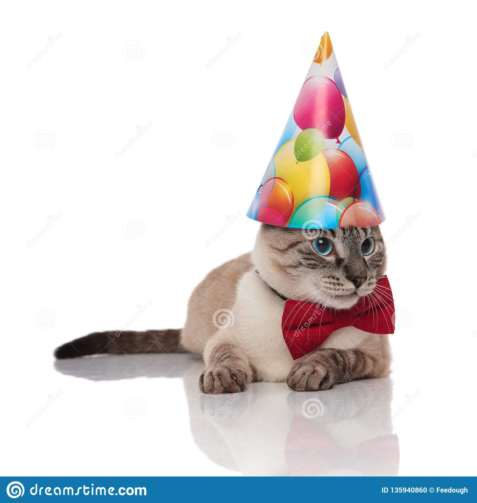 Classy Burmese Cat With Birthday Hat Looks To Side
