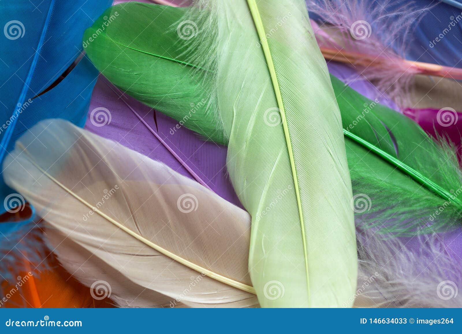 Clavettes color?es