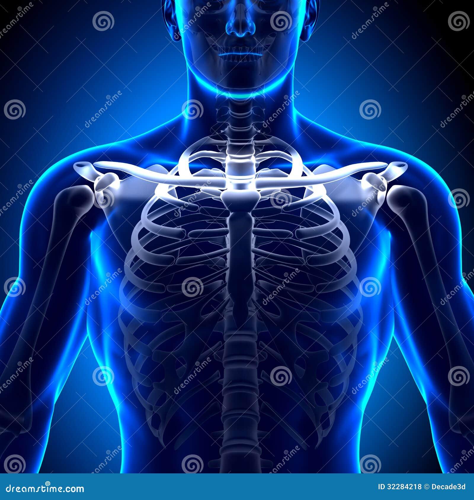 Radiology and collar bone cracker