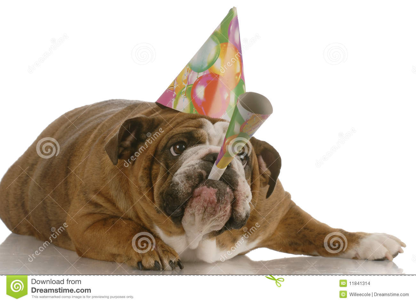 Claxon que sopla del perro del cumpleaños