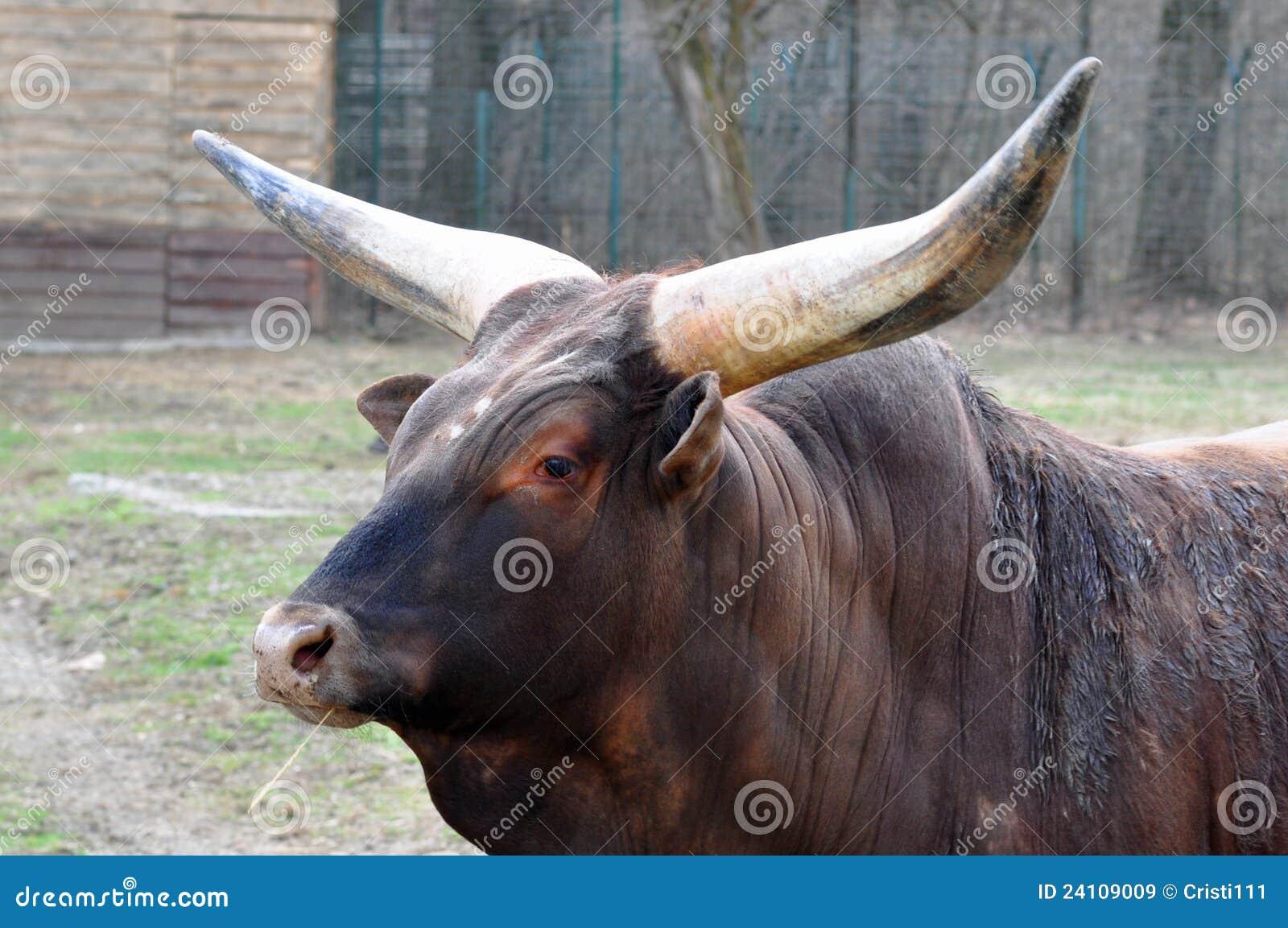 Claxones del búfalo