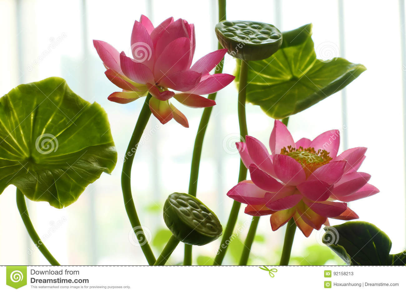 Clay Art Pink Lotus Flower Pot Stock Image Image Of Green Purple