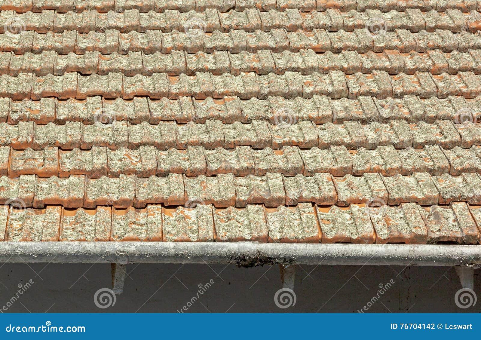 Clay Roof Tiles Covered dans le lichen avec des gouttières d épluchage
