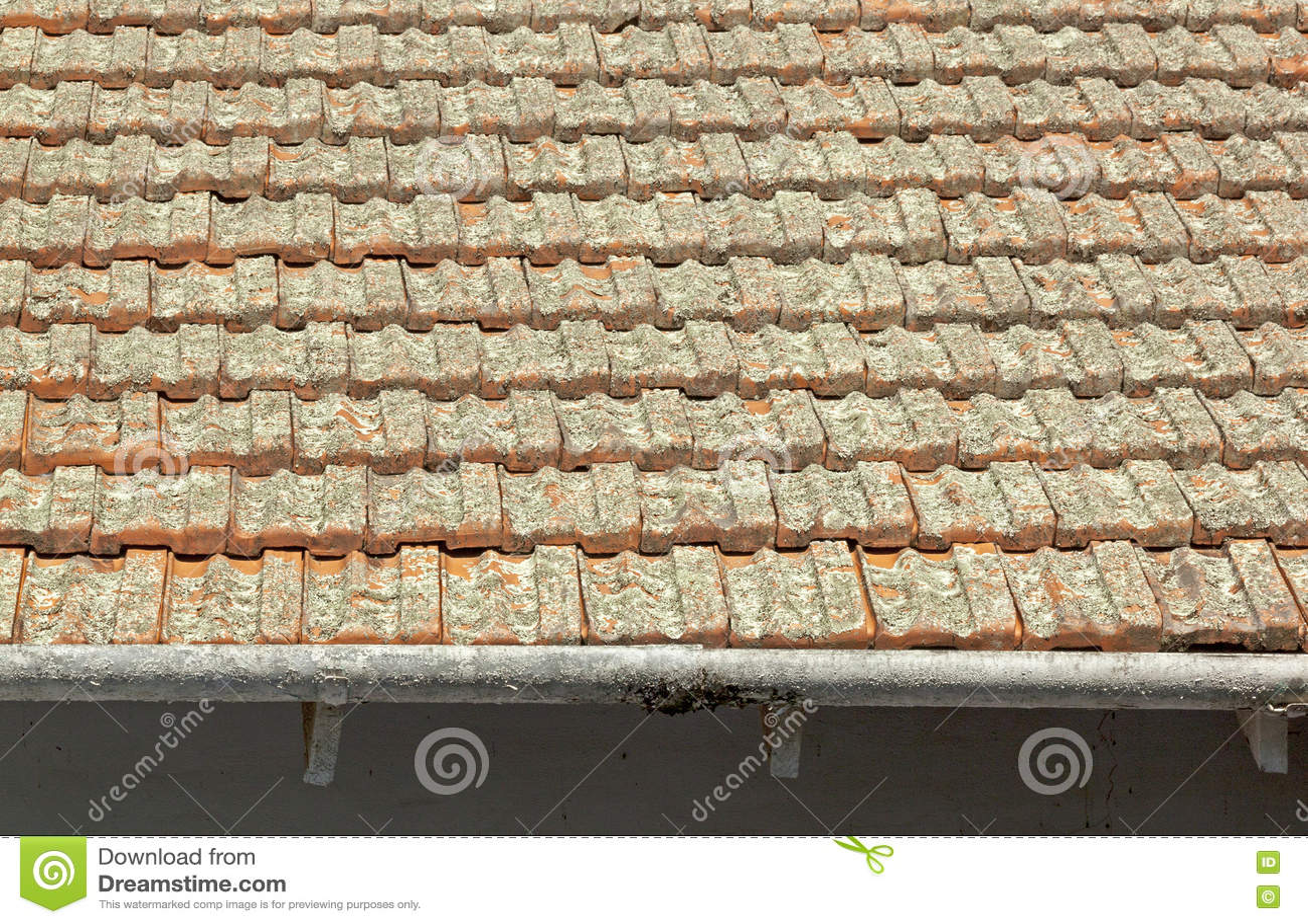 Clay Roof Tiles Covered in der Flechte mit Schalen-Gossen