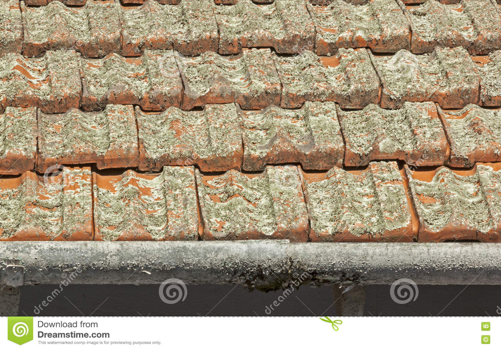 Clay Roof Tiles Covered i lav med skalningsavloppsrännor