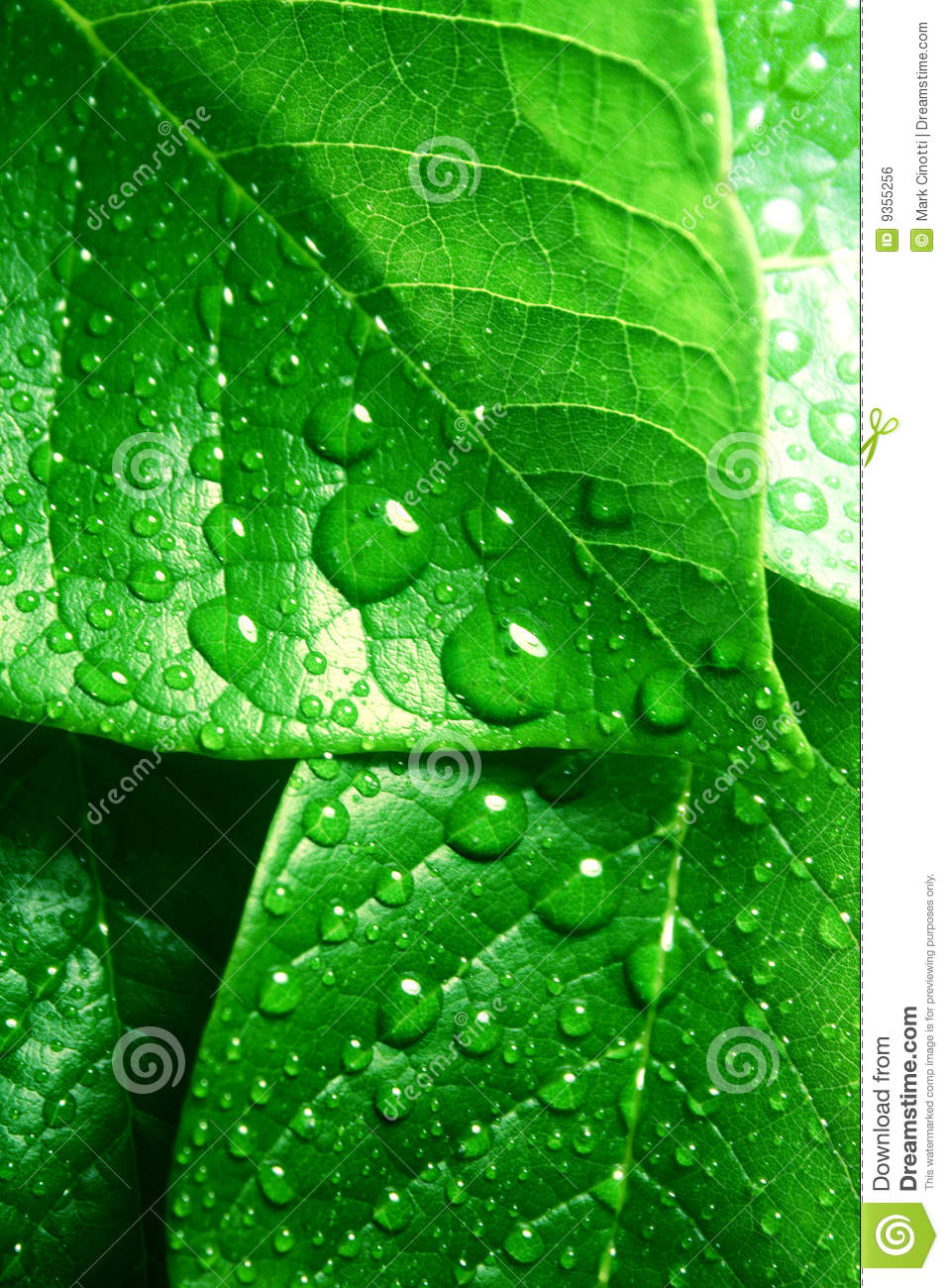 Clean fresh green leaves