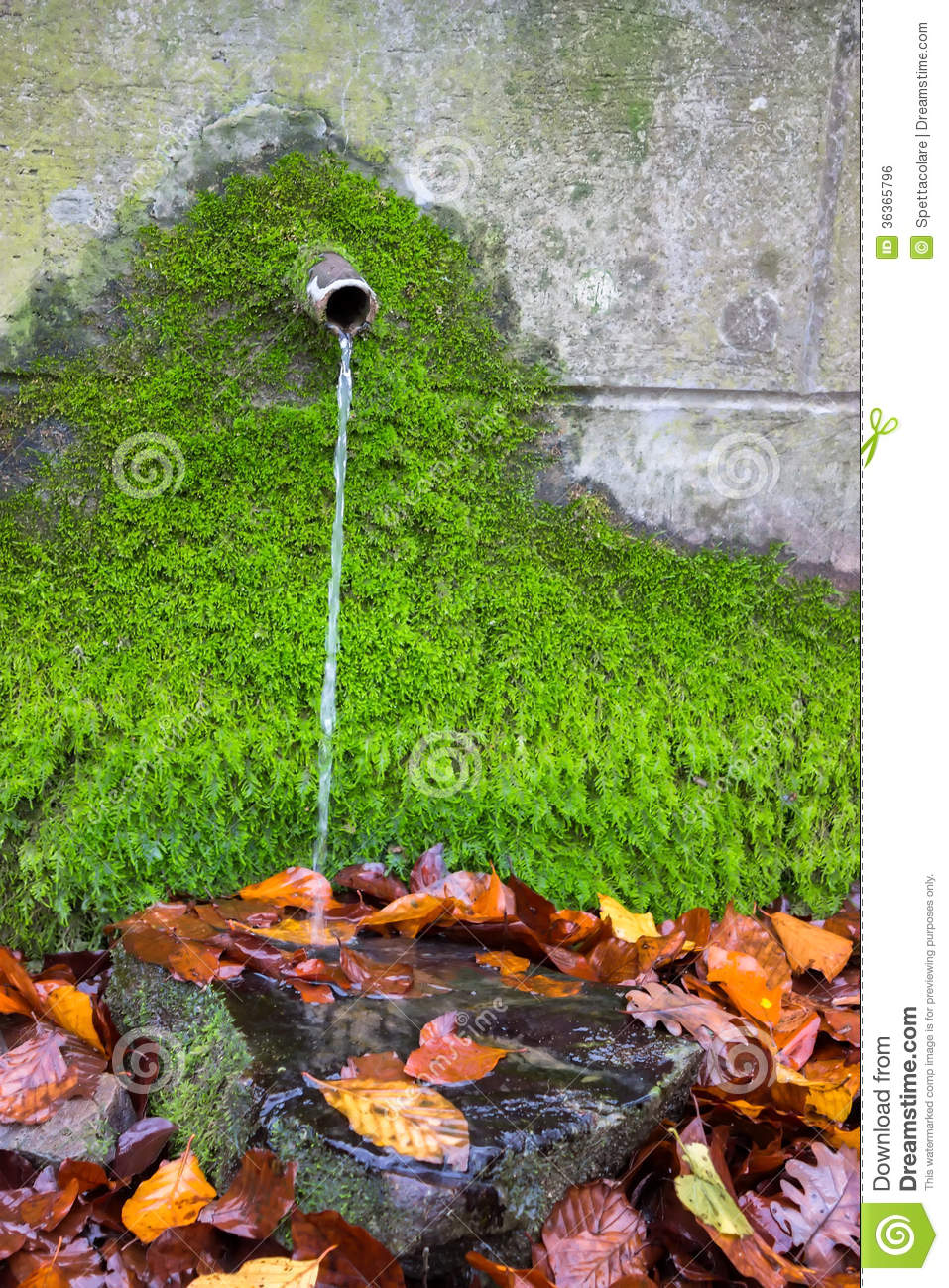 Clean Fresh Water From Water Source With Green Moss