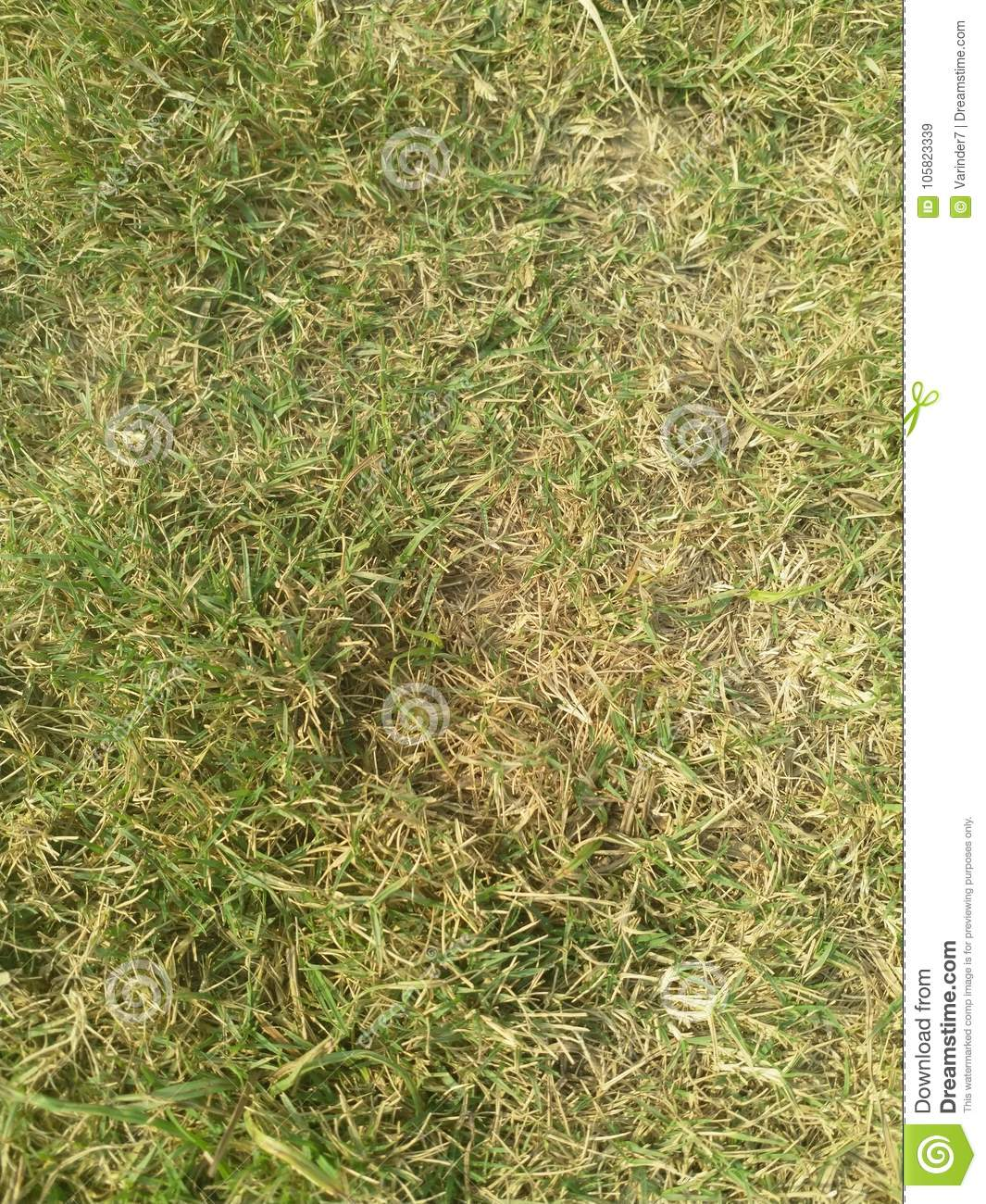 Clean green grass in high resolution