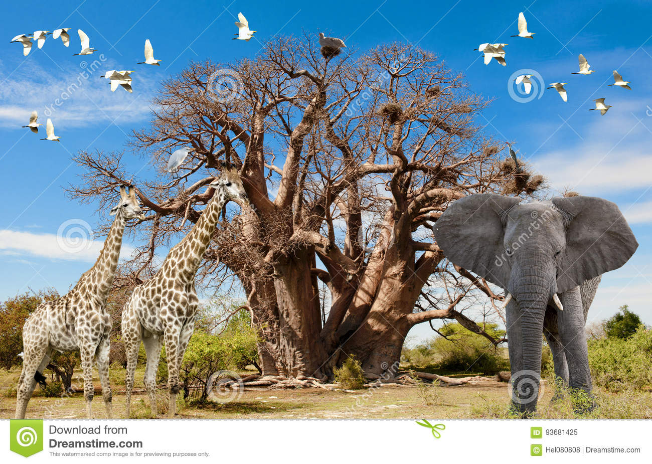 Animals of Africa, Baobab Tree, Illustration with Giraffes, Elephant and Birds with Baobab Tree