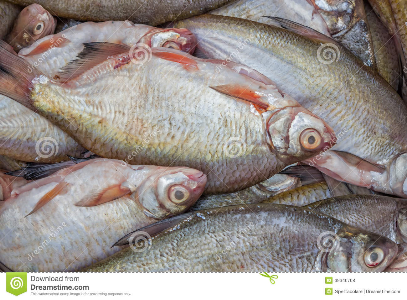 Cleaned fish for sale fish background stock photo image for Stock fish for sale