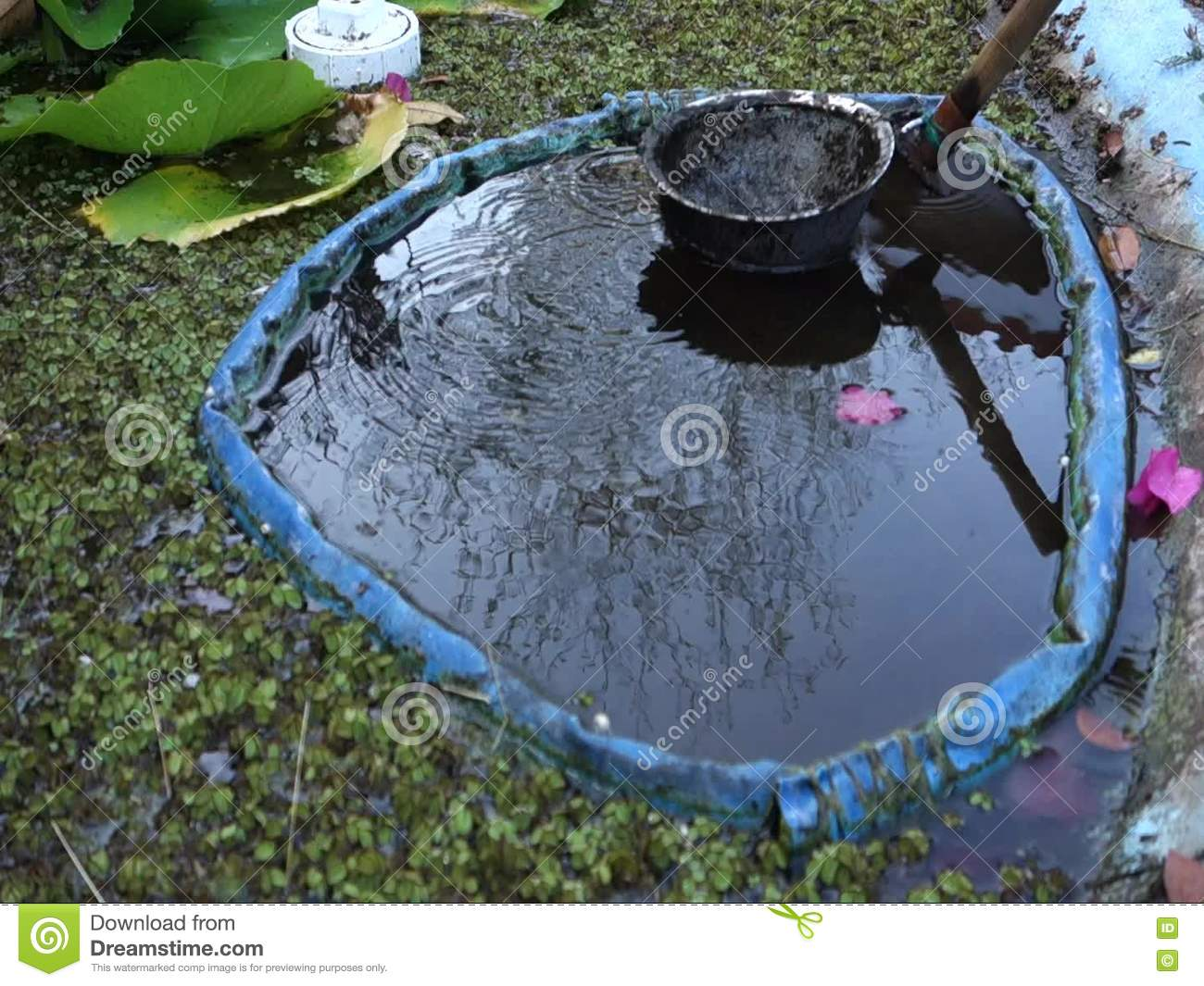 Cleaning Muck From A Fish Pond In The Caribbean Stock