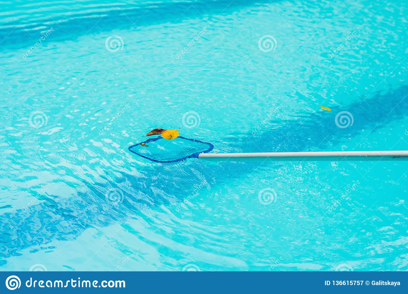 Cleaning Swimming Pool With Cleaning Net In The Morning ...