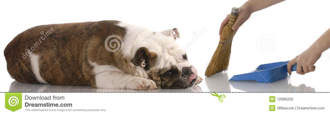 Cleaning Up After The Dog Stock Photo Image Of Dustpan