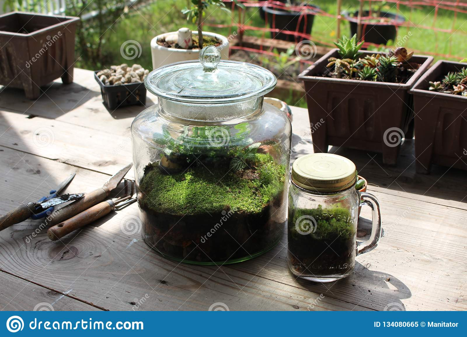 Clear Glass Jar Of Terrarium With Moss And Plant Stock Image Image Of Cute Fresh 134080665