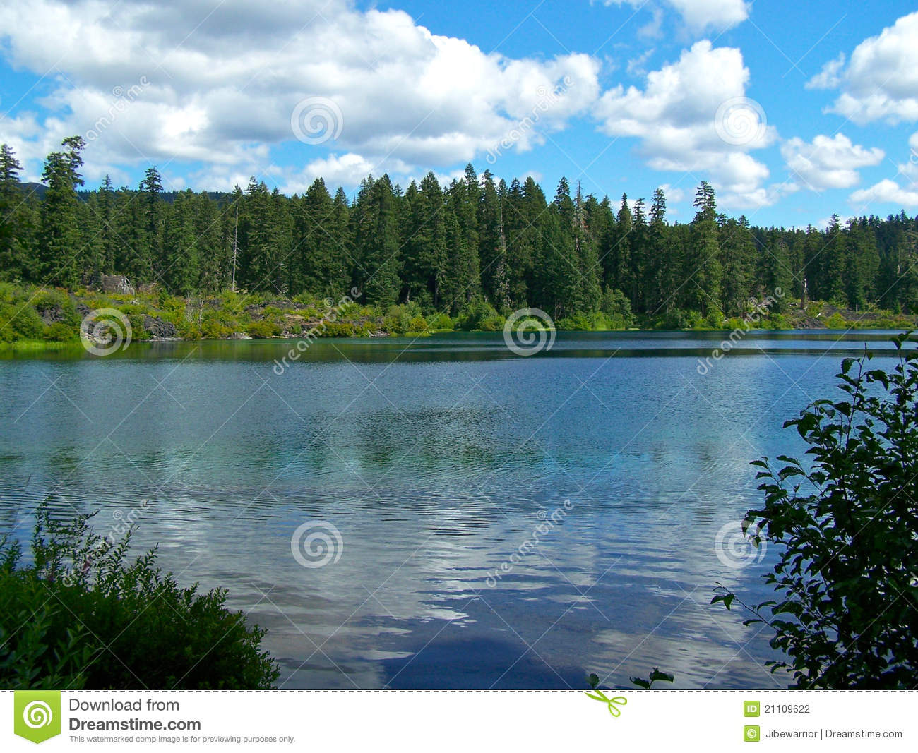 Clear lake oregon stock photo image of clear trees for Clear lake oregon fishing