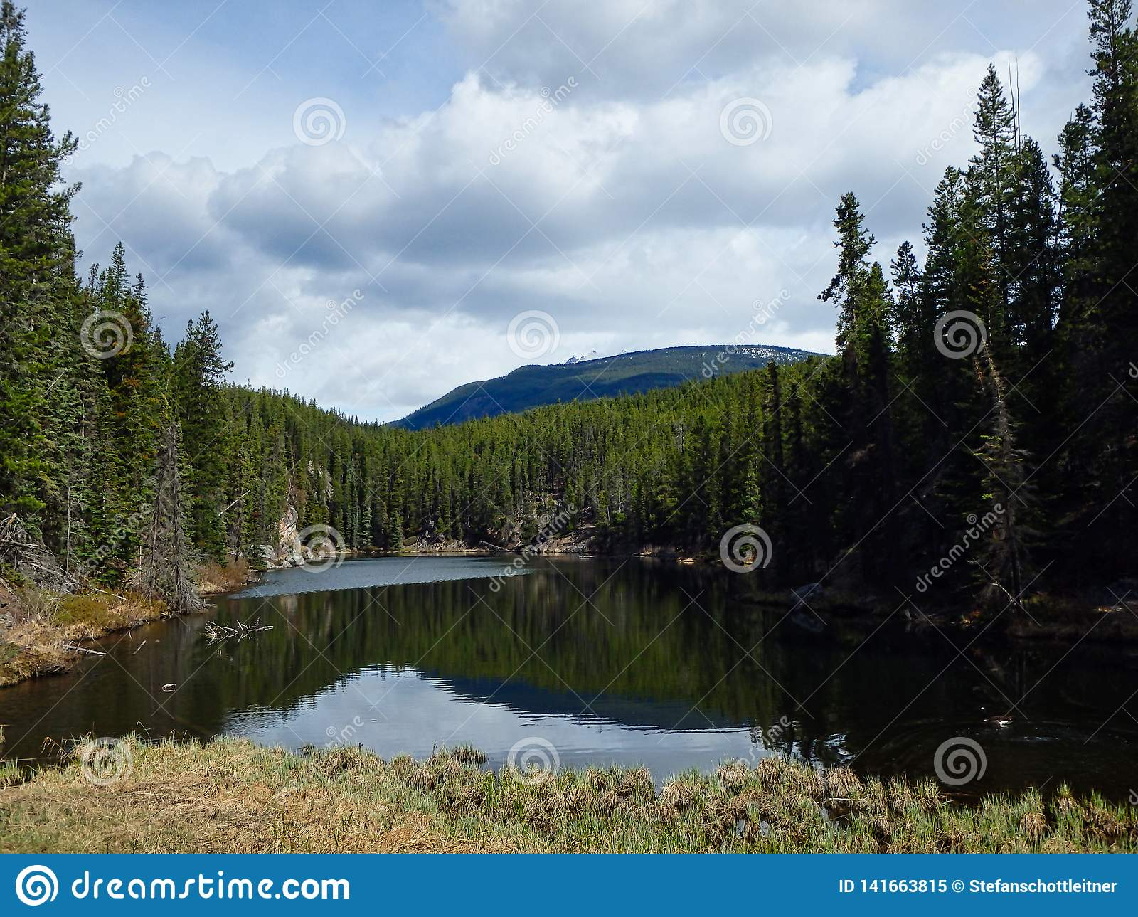 A Clear Lake In The Woods In Summer Stock Image - Image of