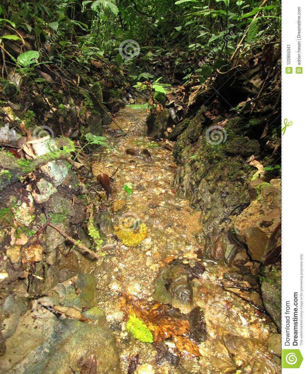 clear springs flow in tropical forests