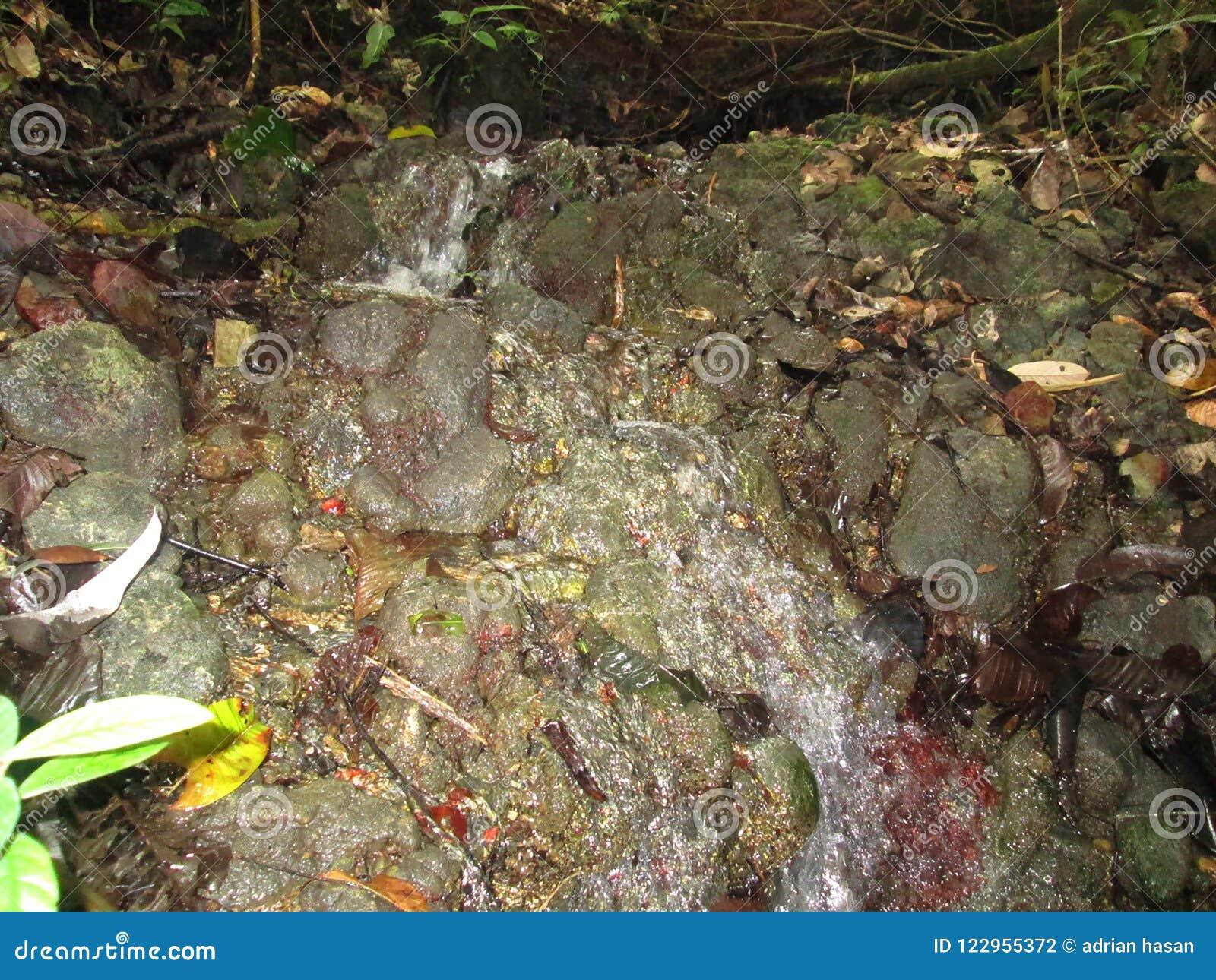 Clear- Springsfluß in tropische Wälder