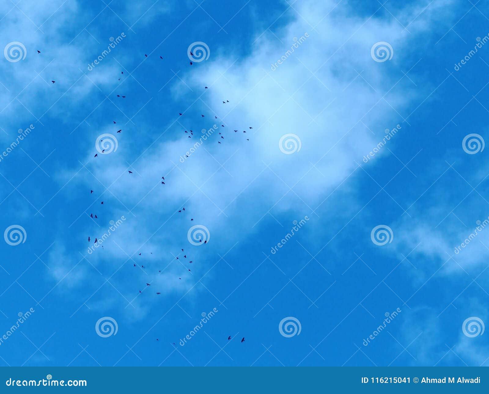 Clear sun with birds