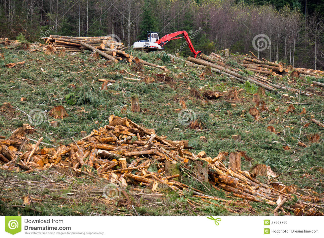 Clearcut logging in the Pacific Northwest