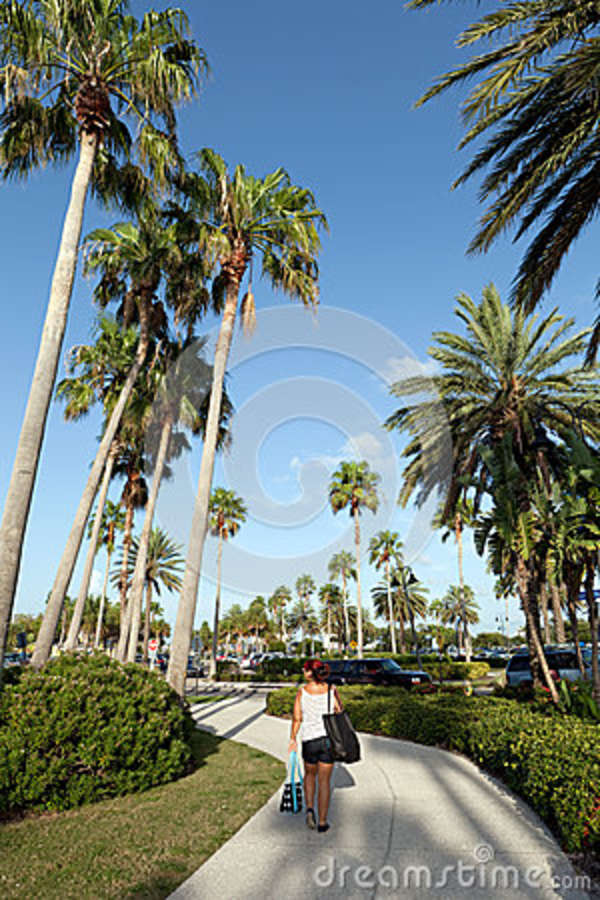 Clearwater Florida Palm Trees Stock Photo